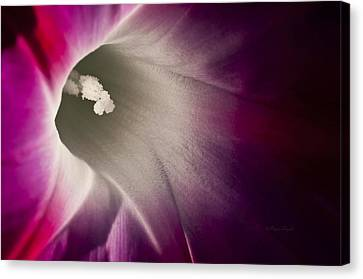 Morning Glory Pink Canvas Print