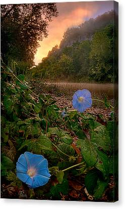 Morning Glory Canvas Print by Robert Charity