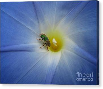 Morning Glory Visitor 1 Canvas Print