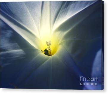 Morning Glory Visitor 2 Canvas Print