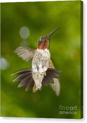 Canvas Print featuring the photograph Morning Greeter by Alice Mainville