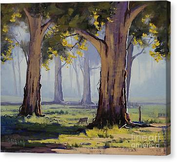 Morning Gums Canvas Print by Graham Gercken