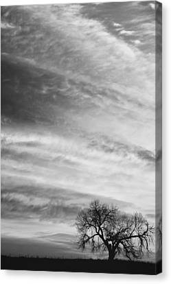 Morning Has Broken Like The First Dawning Portrait Bw Canvas Print by James BO  Insogna