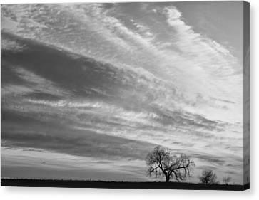 Morning Has Broken Three Trees Bw Canvas Print by James BO  Insogna