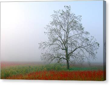 Canvas Print featuring the photograph Morning In The Meadow by Wendell Thompson