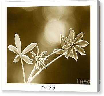Morning Canvas Print by Artist and Photographer Laura Wrede