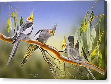 Morning Light - Cockatiels Canvas Print by Frances McMahon
