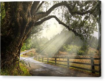 Autumn Scenes Canvas Print - Morning Light by Debra and Dave Vanderlaan