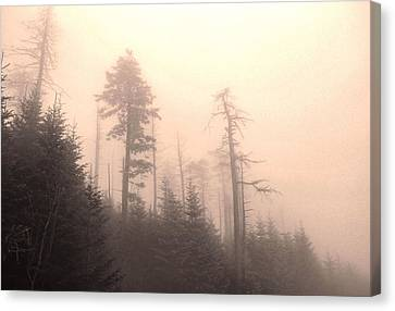 Morning Light In The Appalachian Mountains Canvas Print