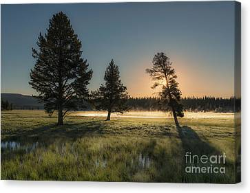 Morning Light In Yellowstone Canvas Print by Sandra Bronstein