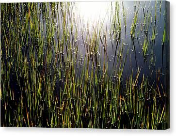 Morning Light Of God Canvas Print by Karen Wiles