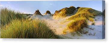 Morning Light On Forvie Dunes Canvas Print by Panoramic Images