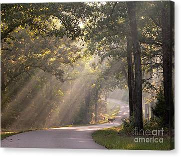 Morning Light With Fawn And Doe Canvas Print by David Bearden