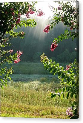 Morning Marsh Canvas Print by Carol Groenen