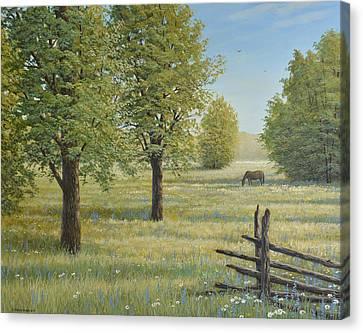 Morning Meadow Canvas Print by Jake Vandenbrink