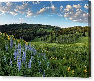 Morning Meadow Canvas Print by Leland D Howard
