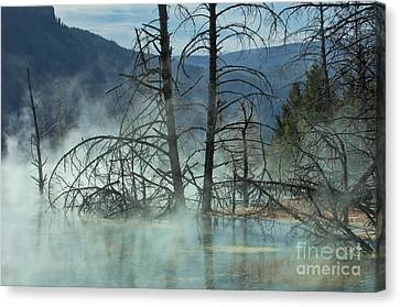 Morning Mist At Mammoth Hot Springs Canvas Print by Sandra Bronstein