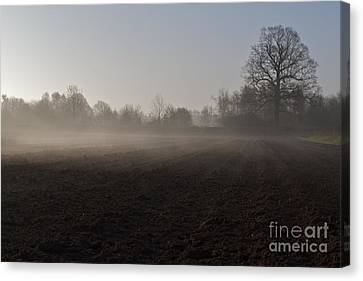 Canvas Print featuring the photograph Morning Mist  by Gary Bridger
