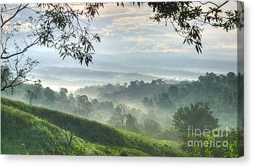 Morning Mist Canvas Print by Heiko Koehrer-Wagner