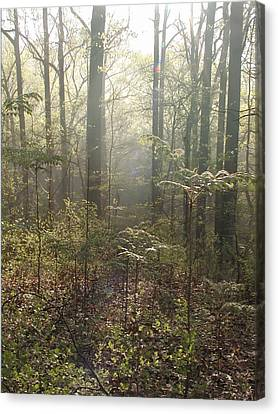Morning Mist In The Forest Canvas Print by Bill Cannon