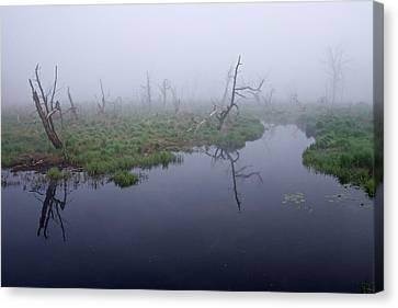 Morning  Mist Canvas Print by Robert Olshansky