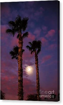 Morning Moon Canvas Print by Robert Bales