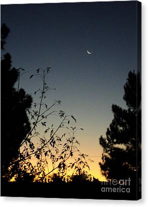 Canvas Print featuring the photograph Morning Moonshine by Carla Carson