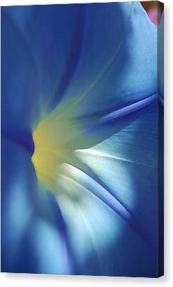 Morning Of Glory Canvas Print