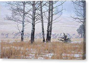 Morning Of The Elk Canvas Print