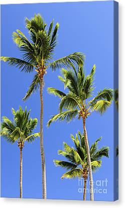 Garden Scene Canvas Print - Morning Palms by Elena Elisseeva