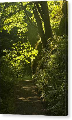 Morning Path Canvas Print by Andrew Soundarajan