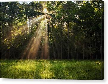 Morning Radiance Canvas Print by Andrew Soundarajan