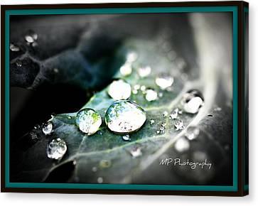 Canvas Print featuring the photograph Morning Rain by Michaela Preston