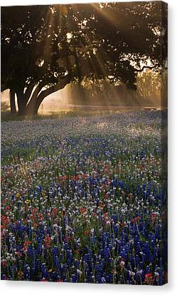 Foggy Day Canvas Print - Morning Rays by Eggers Photography