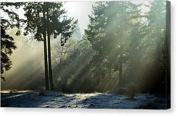 Canvas Print featuring the photograph Morning Rays by Julia Hassett