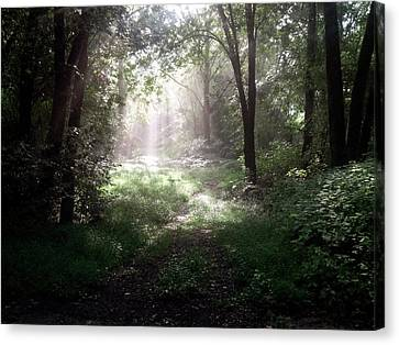 Morning Rays Canvas Print by Melissa Krauss