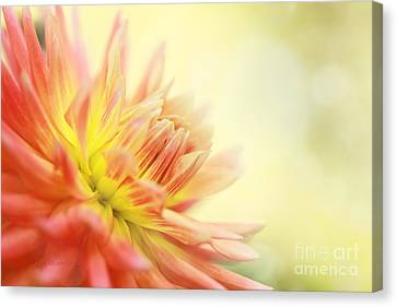 Morning Serenade Canvas Print by Beve Brown-Clark Photography