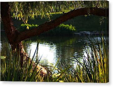 Canvas Print featuring the photograph Morning Serenity by Richard Stephen