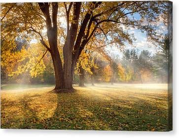 Morning Shadows Canvas Print by Bill Wakeley