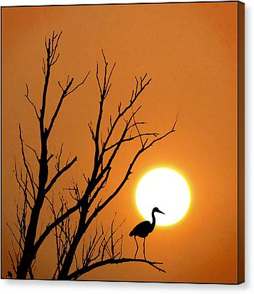 Morning Silhouettes Canvas Print by Adrian Campfield