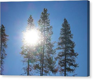 Canvas Print featuring the photograph Morning Sun by Jewel Hengen