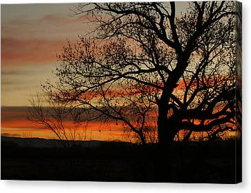 Morning View In Bosque Canvas Print by James Gay