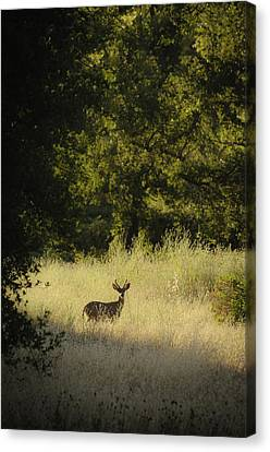 Morning Visitor 2 Canvas Print