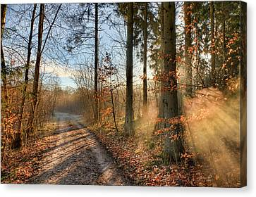Morning Walk Canvas Print by EXparte SE