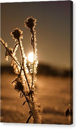 Morning Walk Canvas Print by Miguel Winterpacht