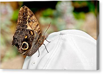 Morphos Butterfly On White Baseball Cap Art Prints Canvas Print