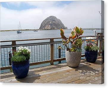 Canvas Print featuring the photograph Morro Bay And Plants by Debra Thompson
