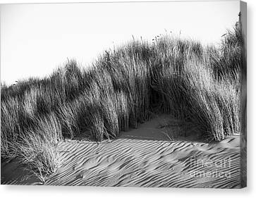 Canvas Print featuring the photograph Morro Beach Shrubbery by Terry Garvin