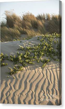 Canvas Print featuring the photograph Morro Beach Textures by Terry Garvin