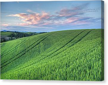 Spring Wheat And Moscow Mtn. Canvas Print